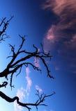 Árbol seco solo Fotos de archivo libres de regalías