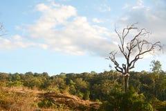Árbol seco solo Fotografía de archivo libre de regalías