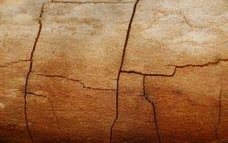 Árbol seco viejo foto de archivo libre de regalías