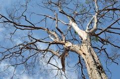 Árbol seco viejo en un cielo nublado Fotos de archivo