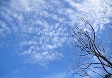 Árbol seco y cielo azul Foto de archivo