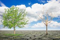 Árbol seco y árbol con follaje denso en suelo separado o tierra agrietada con el cielo azul con las nubes Fotografía de archivo libre de regalías