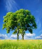 Árbol separado Fotografía de archivo