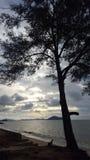 Árbol Sihouette en la playa Imagenes de archivo