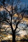 Árbol silueteado fotografía de archivo