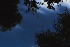 Árbol silueteado contra la perspectiva del cielo nocturno Imagenes de archivo