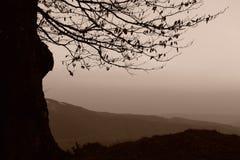 Árbol silueteado en montañas Imágenes de archivo libres de regalías