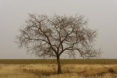 Árbol simple Fotos de archivo libres de regalías