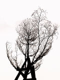 Árbol sin la silueta de las hojas aislada Fotografía de archivo