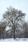 Árbol sin las hojas Imagenes de archivo