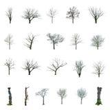 Árbol sin las hojas con elegir Fotos de archivo libres de regalías