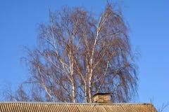 Árbol sin las hojas detrás del tejado Foto de archivo libre de regalías