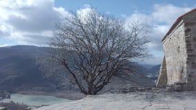 Árbol sin las hojas en el monasterio de Jvari almacen de video