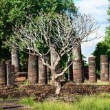 Árbol sin las hojas en ruinas viejas Imágenes de archivo libres de regalías