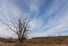 Árbol sin las hojas en un paisaje del otoño Imagen de archivo libre de regalías