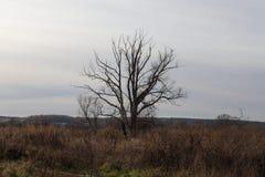 Árbol sin las hojas en un paisaje del otoño Imagen de archivo