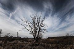 Árbol sin las hojas en un paisaje del otoño entonado Imágenes de archivo libres de regalías