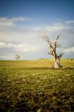 Árbol sin vida Imagen de archivo libre de regalías