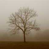 Árbol soñador Imágenes de archivo libres de regalías