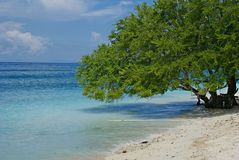 Árbol sobre el agua de mar Imagen de archivo libre de regalías