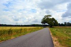Árbol sobre el camino imagen de archivo