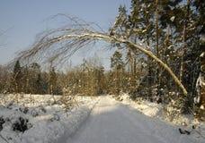 Árbol sobre el camino del invierno Foto de archivo libre de regalías