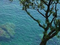 Árbol sobre el mediterráneo Fotos de archivo