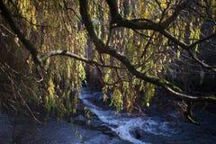 Árbol sobre el río imágenes de archivo libres de regalías