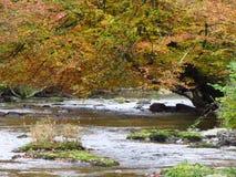 Árbol sobre el río Barle Imágenes de archivo libres de regalías