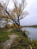 Árbol sobre el río, lago, otoño Fotografía de archivo