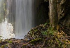Árbol sobre la cascada internacional él parque Croacia del plitvice Fotografía de archivo libre de regalías
