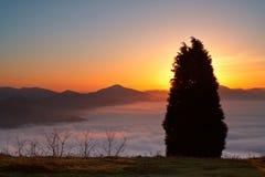 Árbol sobre la niebla Imagen de archivo libre de regalías