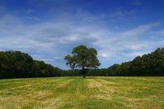 Árbol solamente en campo Imágenes de archivo libres de regalías