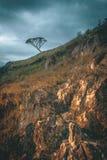 Árbol solamente en la colina fotografía de archivo