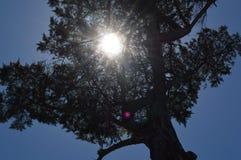 Árbol solar Fotos de archivo