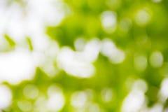 Árbol soleado Fotos de archivo libres de regalías