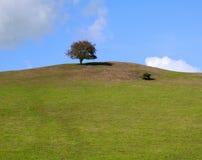 Árbol, solitario, único, en la cresta de una colina contra los cielos azules brillantes del verano imagenes de archivo