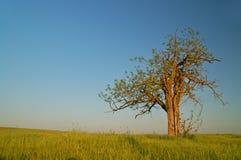 Árbol solitario imagen de archivo libre de regalías