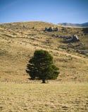 Árbol solitario Fotos de archivo