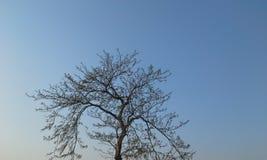 Árbol solitario Foto de archivo libre de regalías
