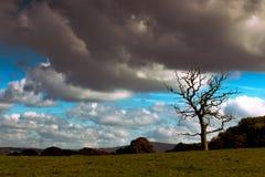 Árbol solitario imagen de archivo