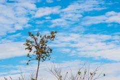 Árbol solitario 8 Imágenes de archivo libres de regalías