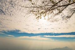 Árbol solitario 5 Fotos de archivo