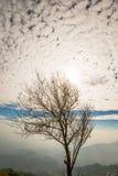 Árbol solitario 7 Imagen de archivo