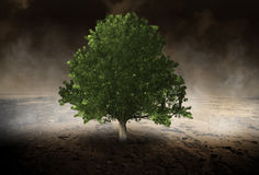 Árbol solitario, ambiente, Evironmentalist, desierto Fotografía de archivo