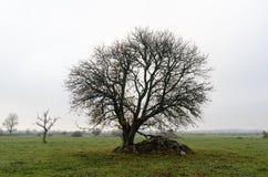 Árbol solitario ancho por temporada de otoño fotos de archivo