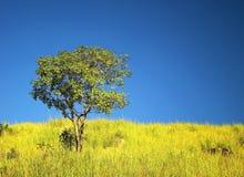 Árbol solitario bajo el cielo hermoso Imagen de archivo