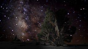 Árbol solitario con el fondo del cielo nocturno de la vía láctea almacen de metraje de vídeo