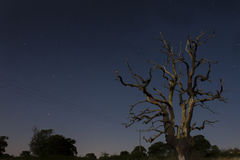 Árbol solitario debajo del cielo nocturno estrellado Imagenes de archivo