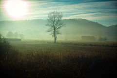 Árbol solitario desnudo que se coloca en un campo Imagen de archivo libre de regalías